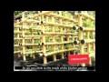 un jardin potager dans une idée d'un échafaudage en bambou