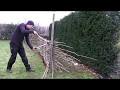 Réaliser une clôture en plessis avec le bois de taille