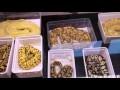 La bourse des crocos - Bourgogne Albino and combos éleveur python