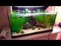 Astuce nettoyage sable de aquarium