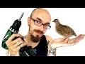 Comment fabriquer une cage pour cailles - Grand Tom -