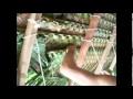 Tressage feuilles de cocotiers