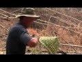 Fabrication d'un panier en bambou.mov