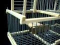 Cage Piège à Trébuchet (Attrape Oiseaux Vivants sans blesser ) A Vendre