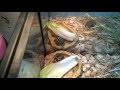 Fabriquer ou refaire un terrarium tortue hermann