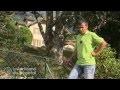 Les règles à respecter entre vous et votre voisin lors de la plantation d'un arbre ?