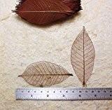 50 feuilles squelette brun hEvEa naturel Scrapbooking artisanat bricolage carte mariage