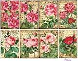 Paper Moon -8 feuilles papier de Qualité scrapbooking 7cm x 10.5cm - Roses