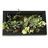 3D Fleurs Artificielles Boule Support mural Cactus Mousse sur la pierre feuilles vert herbe Fougères avec cadre forme vase Décoration, ...