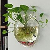 Aquarium ou porte-plante mural-Mural Bocal à Poissons Boule ,Vase en Verre Transparent Mural Forme de Boule pour Plante Fleur Décoration ...