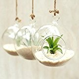 artlass Lot de 3 Suspension Vse Terrarium en verre Bougeoir rond mariage Home Deco Diamètre 10 cm