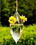 Forme d'olive 2 trous de fleur en verre suspendu Vase Bouteille Container jardin Décor