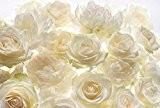 """Komar–xxl4–007–368x 248cm """"Shalimar Fleurs roses Ivoire Floral Papier peint–Blanc/Blanc Cassé (Lot de 4)"""