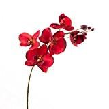 Lot 2 x Tige d'orchidée phalaenopsis en tissu, rouge foncé, 80 cm - 2 pcs Orchidée artificielle / Orchidée décorative ...