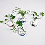 Lot de 4Vase mural en verre à suspendre Fleur Pot de fleurs Réservoir à eau Pot de fleurs Forme ronde ...