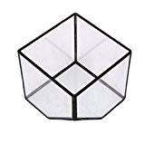 MagiDeal Cube de Verre Vase Décoration pour Maison Jardin Serre Taille S