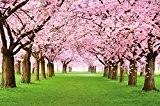 Papier peint qui montre des cerisiers -Forêt avec des cerisiers – Image murale du Printemps de couleur rose pâle – ...