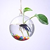 Pot De Fleur Vase En Verre Suspendu Fishbowl Conteneur Terrarium Décoration Maison Bureau - 15cm