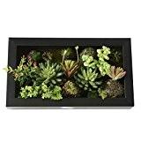 Support mural 3D Fleurs Artificielles Succulente plantes mousse sur la pierre feuilles vert herbe avec cadre forme vase Home Decor, ...