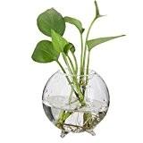 Vase Boule en Verre Transparent pour Plante Fleur Hydroponique Micro Paysage