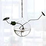 Vase en Verre Bouteille Transparent Boule 12cm de Diamètre Suspendu pour Fleur Hydroponique