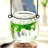 Vase en Verre Citrouille Pot de Fleur Hydroponique Bouteille à Suspendre Transparent