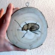 artisanat dart animaux cetoine insecte pyrogravure bois : Cétoine