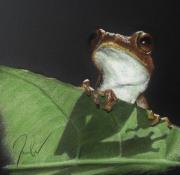 tableau animaux pastel petit format encadre tableau : Grenouille