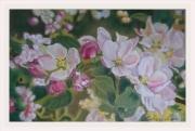 dessin fleurs alsace grand est mulhouse environs : Envie de pintemps