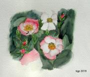 tableau fleurs aquarelle fleur roses : Qualques Roses