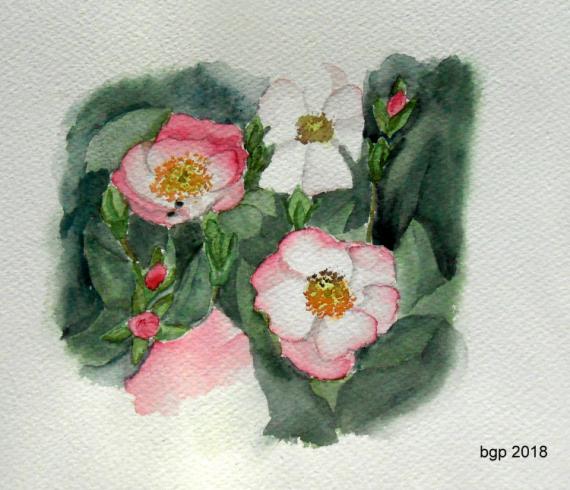 TABLEAU PEINTURE Aquarelle fleur roses Fleurs Aquarelle  - Qualques Roses