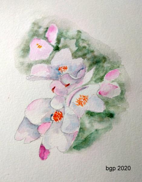 TABLEAU PEINTURE Aquarelle fleur camellia rose Fleurs Aquarelle  - Fleurs de Camellia