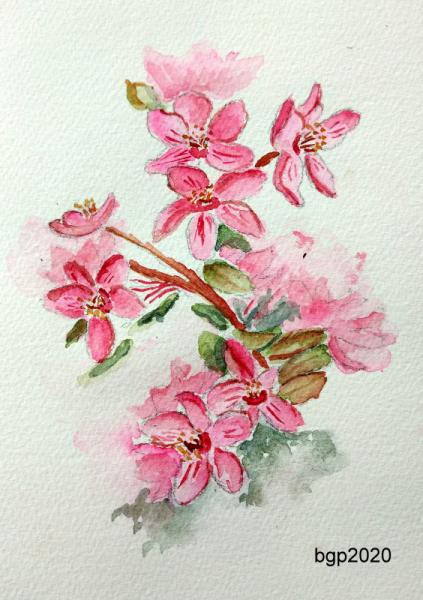 TABLEAU PEINTURE Aquarelle fleur pommier rose Fleurs Aquarelle  - Pommier a fleur