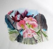 tableau fleurs aquarelle fleur cognassier du japon printemps : Touche de printemps