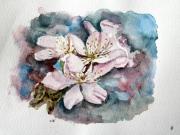 tableau fleurs fleur cerisier japon : cerisier du japon