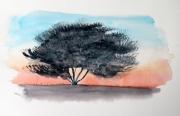 tableau fleurs aquarelle arbre ombre chinoise coucher soleil : Ombre chinoise