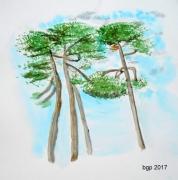 tableau fleurs aquarelle arbres pins landes : Les Pins
