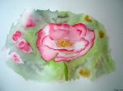 tableau fleurs aquarelle fleur pavot rose : Pavots