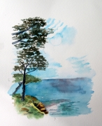 tableau paysages aquarelle pin mediterranee jardin du rayol : La Rayol