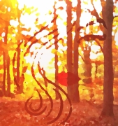 photo paysages foret bois nature lumiere : La forêt musicale