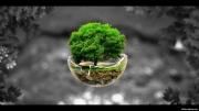 photo paysages arbre nature planete ecologie : Le dernier arbre