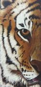 "tableau animaux animaux tigre felin fauve : ""OJAS"""