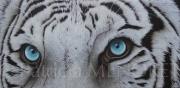 """tableau animaux tigre animal fauve afrique : """"JAWAHAR"""""""