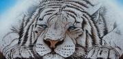 "tableau animaux tigre tigre blanc fauve animal : "" AZUL """