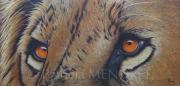 "tableau animaux animaux animal lion felin : ""SAM"""