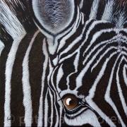 "tableau animaux zebre animaux afrique animal : "" SWEENY """