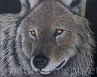 """"""" WOLF"""""""