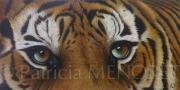 "tableau animaux tigre animaux fein fauve : ""AYATI"""