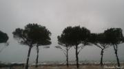 photo paysages arbre pluie trouble goutte d eau : jour de pluie 2