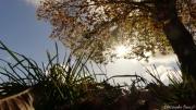 photo paysages arbre lumiere automne : Sous un Arbre